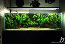 Planted Aquarium / Planted Aquarium