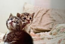 Purr Babies / Kittens and Adult Cats / by Shannon Sweeney