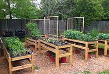vegie herb garden