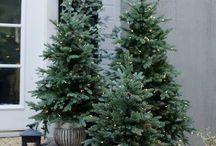 Christmas tree !!