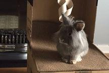 Rabbit / Rabbits personal