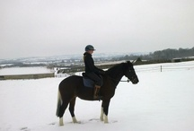 Magwa  / Magwa born in 2008 Owned by Tracey & Lottie Wemyss