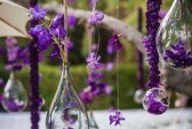 violet bulle