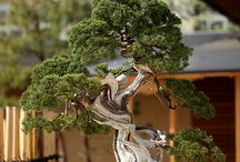 Bonsai Tree Art