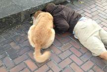Una zampa per #amica / La vera #amicizia tra Zampa Animali