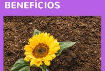 Dicas de jardinagem e paisagismo - como plantar, cultivar em casa, apartamento, horta em vasos