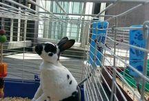 Gulliga kaniner