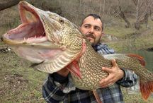 pike fishing....