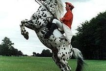HORSE♡☆♡☆