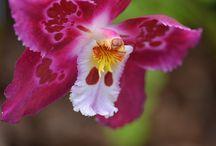 Orchidee / Reine des Fleurs
