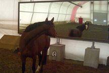 Horse arena.