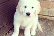 puppy<3