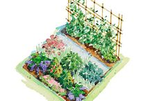 Garden/ Flower Bed Ideas / by Lindsey Williams