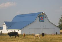 Barn Quilts / by Katie Lindhurst