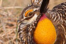 Birds - Western North America