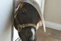Grappig paard