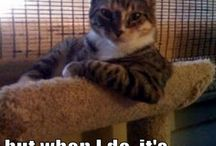 I Am Amused / Pretty much just cat memes, funny quotes, and funny stuff that makes me laugh.