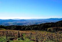 VALDONICA Winery / VALDONICA vineyards stretch along south facing slopes in Southern TUSCANY - in touch with the Mediterranean Sea. Our vision in wine-making is to provide maximum space for nature with minimal human intervention. In Valdonica wines we find the character of the location in balance with elegance and subtlety. Stop by, breath our vineyards, taste our wines, stay with us - looking forward to meeting you at my VALDONICA Winery & Vineyard Residence!