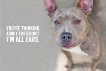 Be a Foster Home