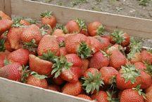 Household & Gardening /Háztartás  & Kertészkedés
