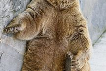 Ursoj / Medvék