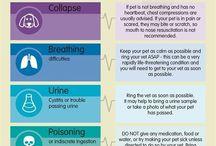 Dog Health Info