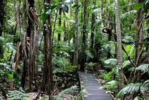 Cairns, Australia / Images from #Cairns, Australia