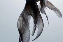 Animal&Fish