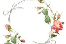 kukkia ja keijuja