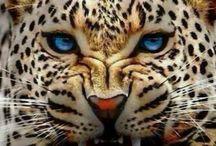 Vahşi hayvan resimlerim
