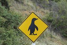 Road sign New Zealand