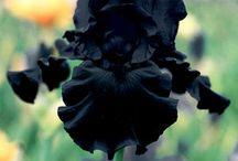Gothic Flowers
