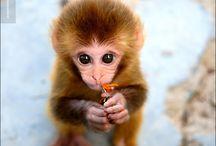 Cute animals / by Mari Rodriguez
