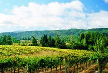 Mendocino Bounty / Celebrating the beauty and bounty of our gorgeous home and fabulous appellation.