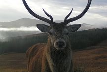 Stag totem / by TennesseeZen