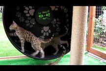Cat Gear
