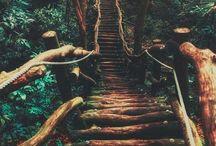 Chemins de rêve / Des chemins improbables, des ponts suspendus dans la jungle. Ici je regroupe tous les chemins qui me font rêver.