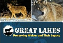 Great Lakes area Wolves News and Info / Great Lakes area news and info on wolves