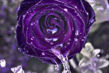Purple HaZe... / by Heather Ferguson