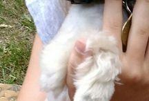 My lovely dog ❤Monty❤