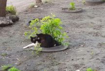 Cats (My Photos)