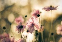 Photos of Spring Photography
