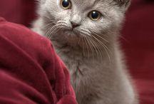 Too much animal cuteness