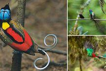 Animals / Nature