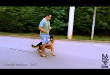 Adestramento / Dog Training