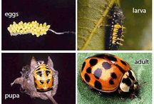 Garden: Pests, Invasives & Diseases