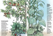 Food Forests and Polyculture / Food Forests and Polyculture