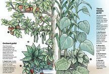Harmony plants