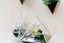 vasi trasparenti con piante