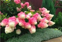 A floweshade flowers